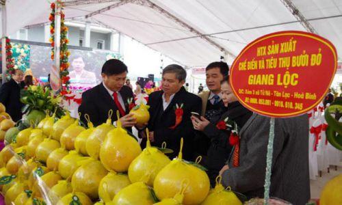 Hòa Bình vui mừng đón bằng bảo hộ nhãn hiệu tập thể Bưởi đỏ Tân Lạc