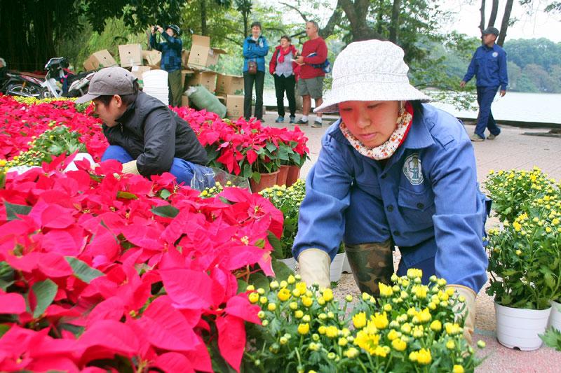 Công nhân trồng thêm nhiều hoa tươi quanh khu vực hồ Hoàn Kiếm.