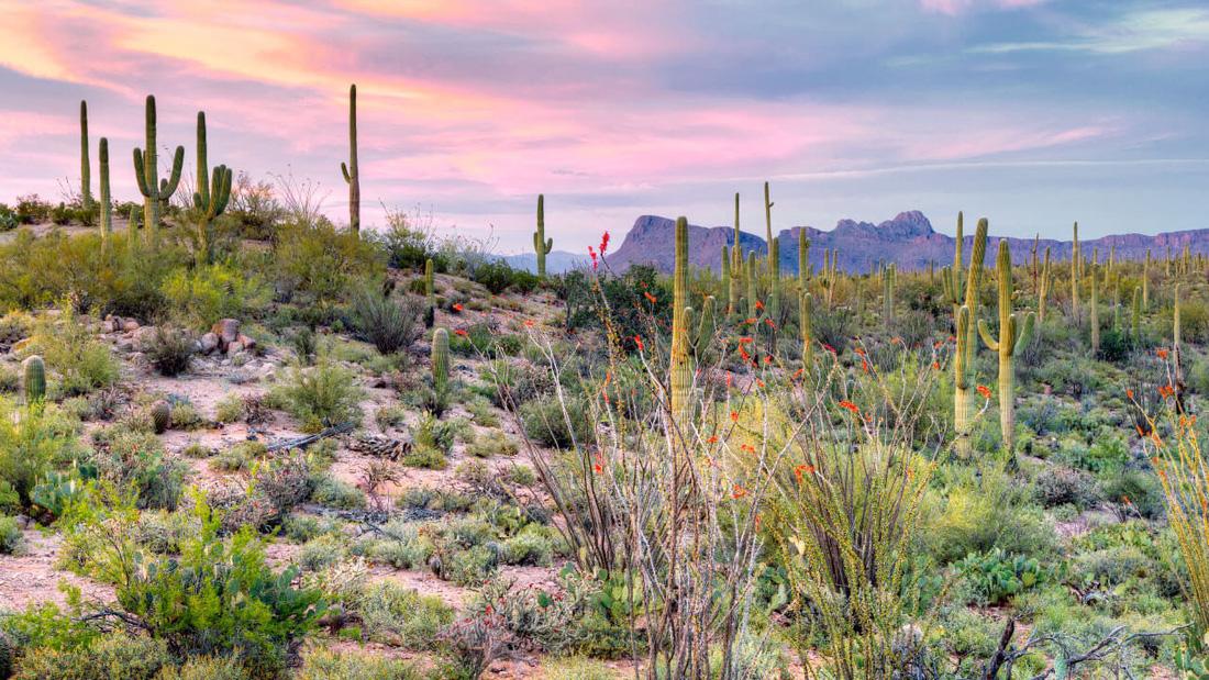 Sa mạc Sonoran có diện tích 260.000 km2. Phần diện tích trải rộng một phần ở Arizona, California, và Mexico.  Đây là sa mạc nhận được lượng mưa nhiều nhất trong số tất cả các sa mạc trên Trái đất, khoảng 25 - 35 cm mỗi năm.  Có lẽ nhờ lượng mưa này mà Sonoran không quá khô cằn, thậm chí được biết đến với sự phong phú đa dạng sinh học. Sonoran có hơn 60 loài động vật có vú, 20 loài lưỡng cư, 100 loài bò sát, 20 loài cá, 350 loài chim, 2000 loài thực vật cùng nhau sinh sống.  Tuy thế, đây cũng là sa mạc nóng nhất ở Bắc Mỹ. Vào mùa hè, nhiệt độ ở sa mạc Sonoran đo được là 40 độ C, một vài điểm khác mức nhiệt lên tới gần 50 độ C.  Ngoài ra, Sonoran còn là nơi sinh sống của nhiều loài thực vật hiếm. Ví dụ cây saguaro, một loại xương rồng chỉ phát triển ở sa mạc Sonoran.