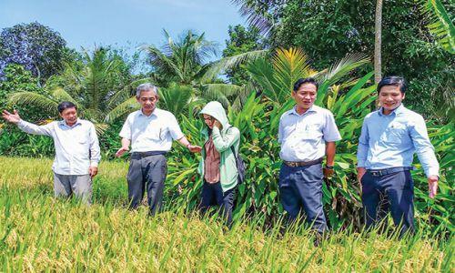 Vĩnh Thạnh sản xuất Gạo sạch, An toàn