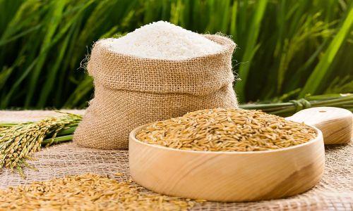 Tổng quan về thị trường gạo trong quý II